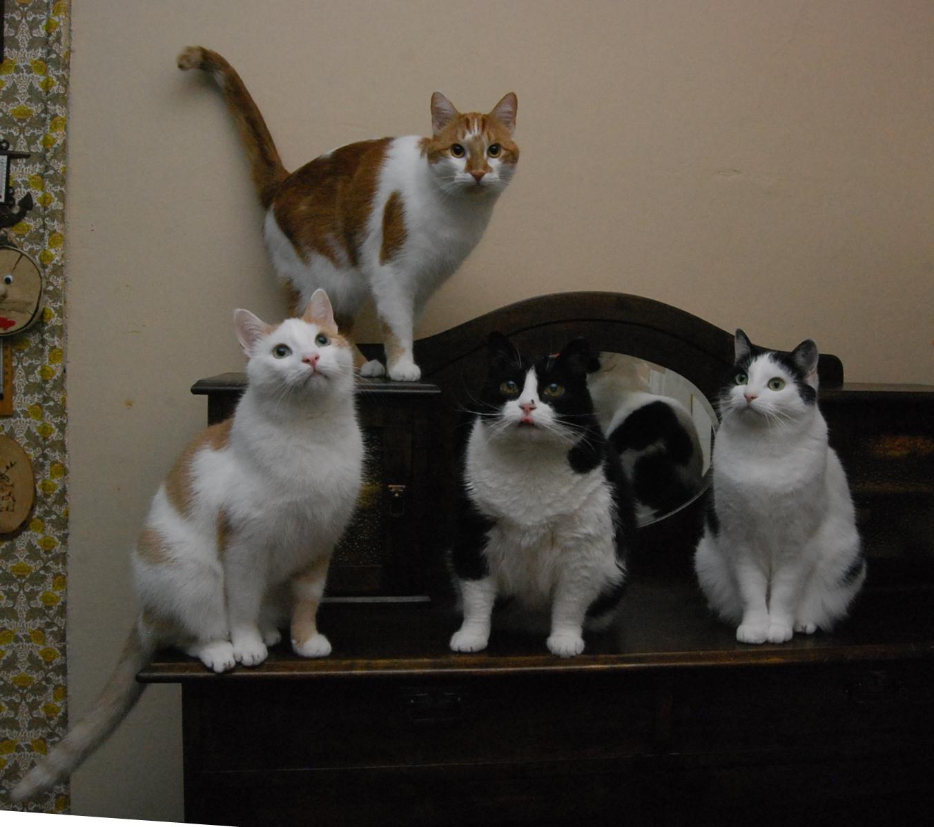Neljä kissaa istuvat lipaston päällä ja poseeraavat.